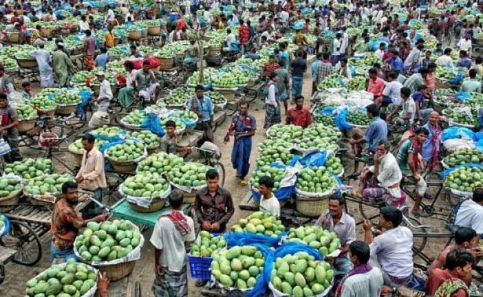 আমের ফলন, চাঁপাইনবাবগঞ্জকেও ছাড়িয়ে যাবে নওগাঁ